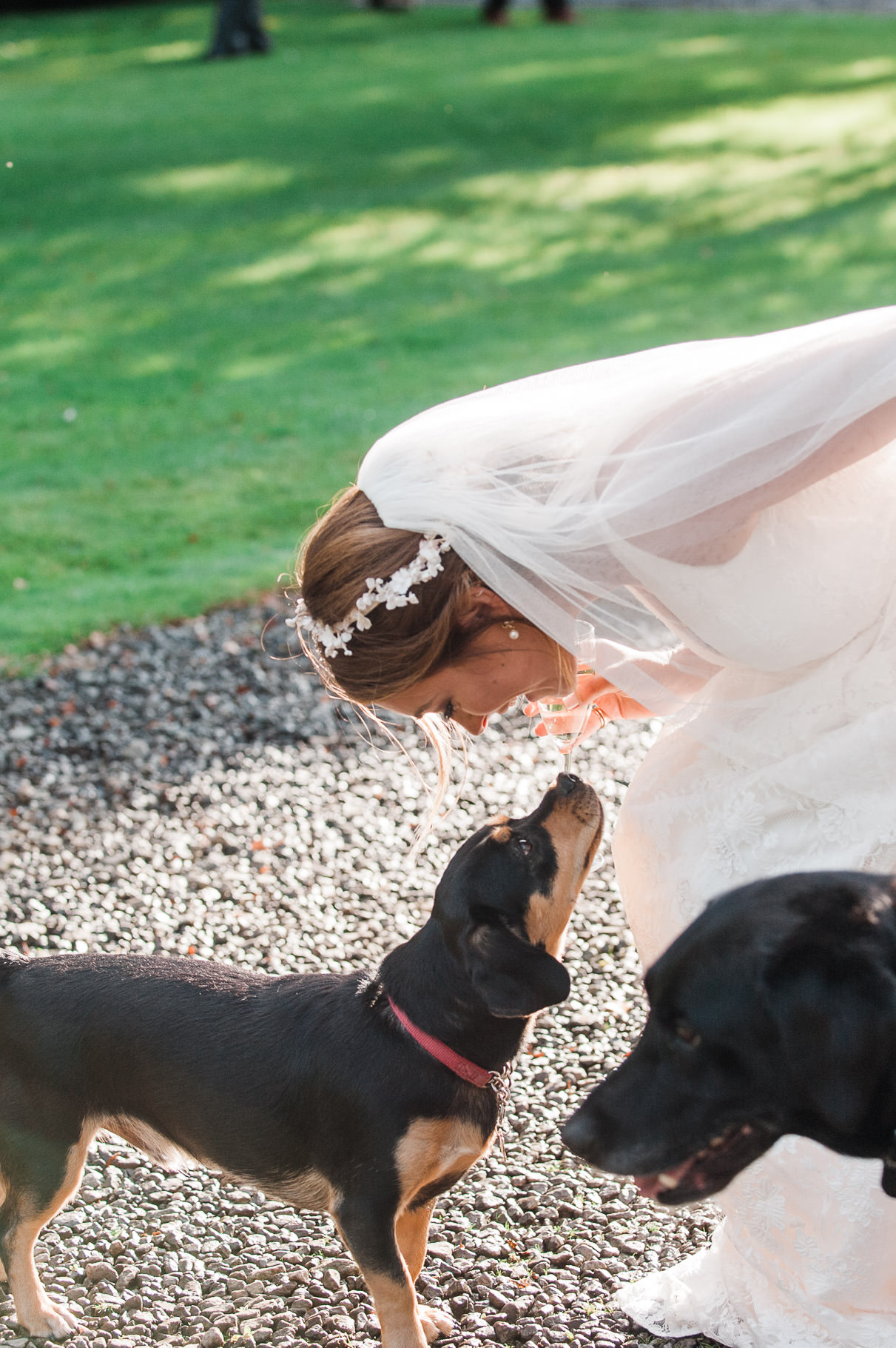 dogs at weddings-bridesmaid dog- dog wedding guest-bride and dog