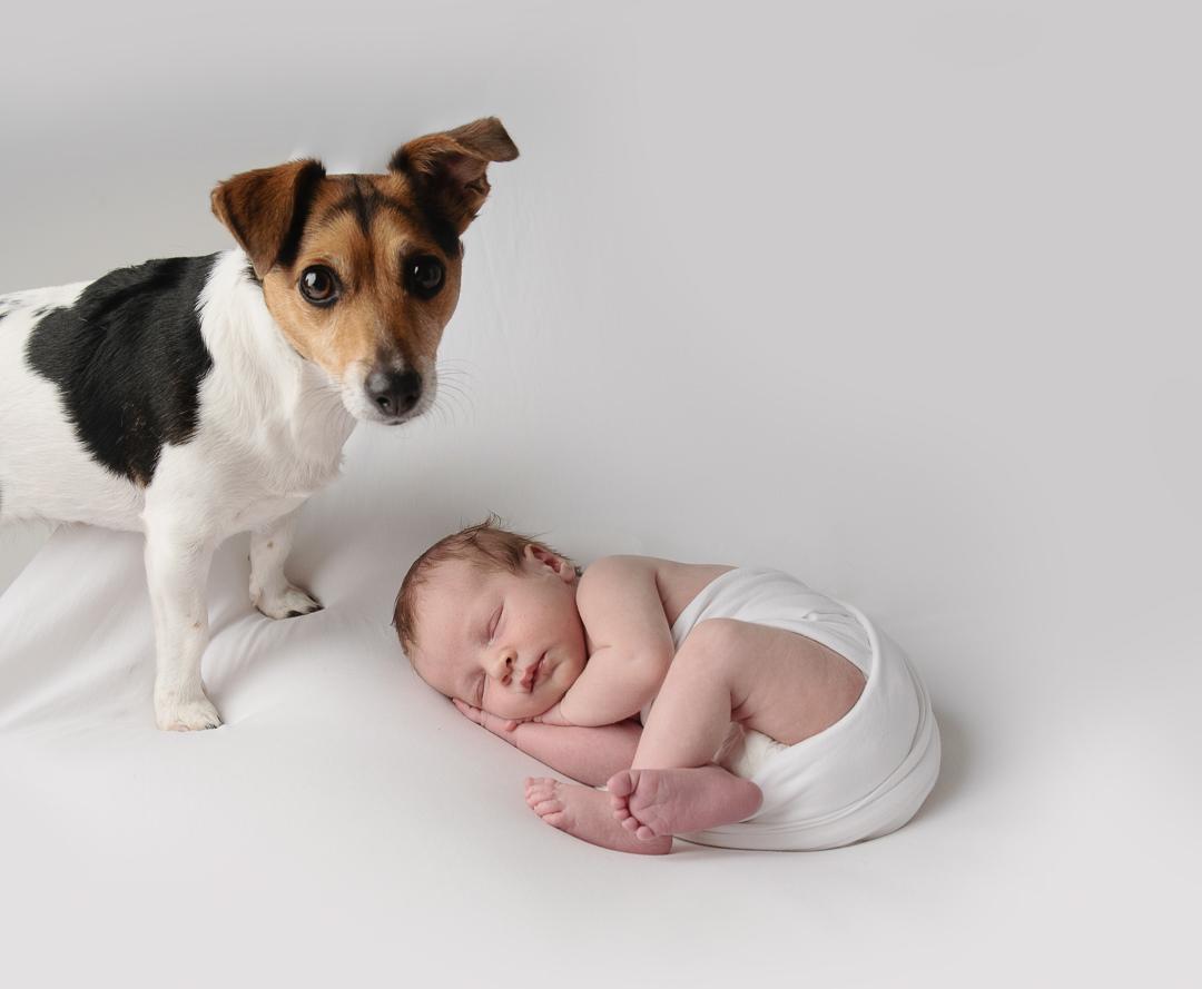 Newborn Baby Photography Glasgow, Pet Photography Glasgow, baby and Dog